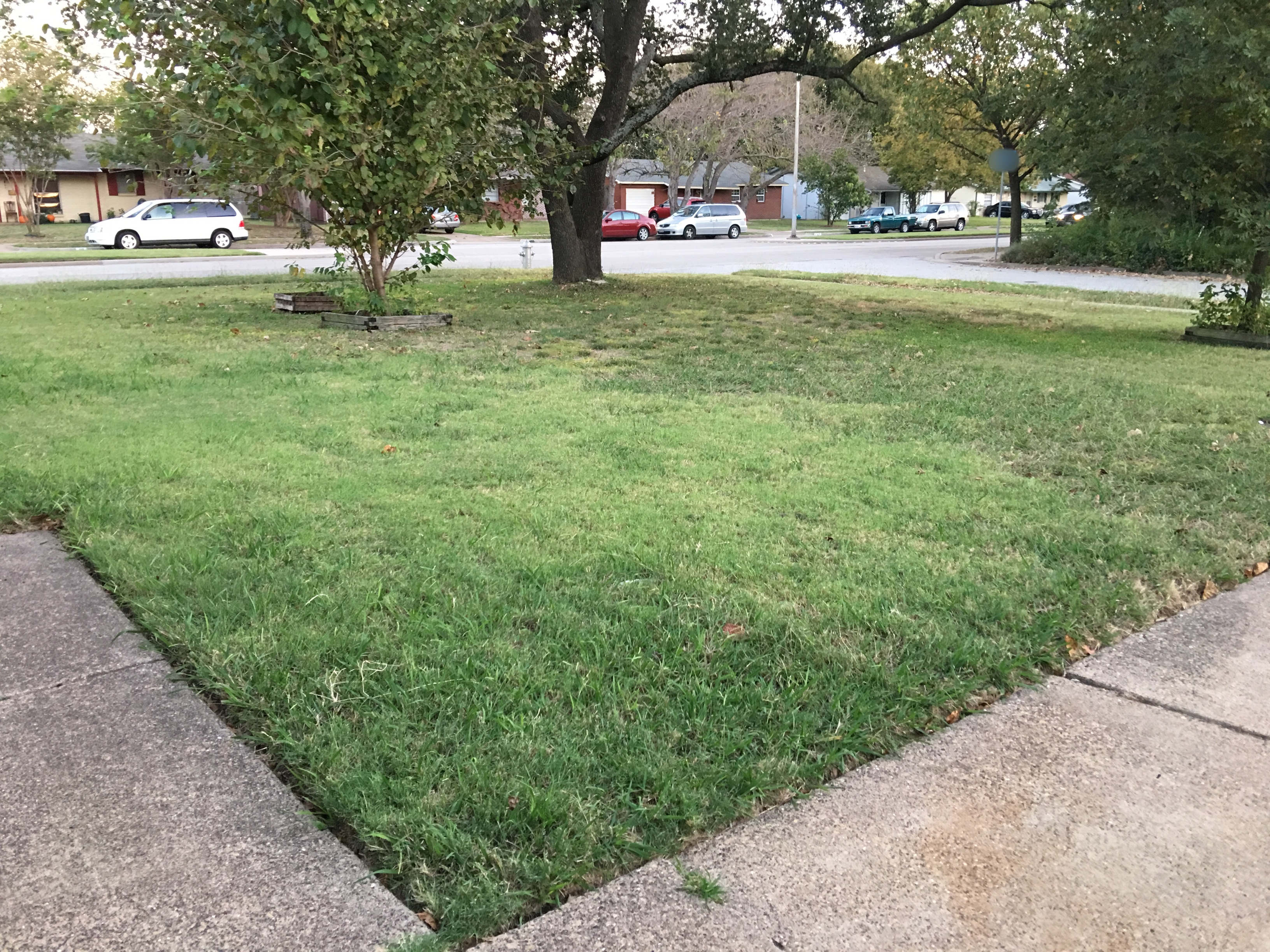 Susan Homemaker v. 2.0: Lawn Makeover